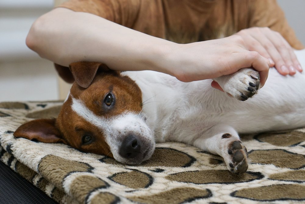 HEALTH BENEFITS OF DOG MASSAGE