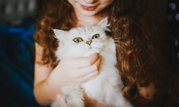 THE DRAMATIC CHANGES IN THE MODERN HUMAN-CAT RELATIONSHIP AND HOW CAN YOU IMPROVE YOUR CAT'S LIFE – PART 1