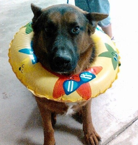 FUN SUMMER ACTIVITIES TO DO WITH YOUR DOG