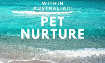 TRAVEL MORE WITHIN AUSTRALIA – 10% OFF CAT MINDING FEB – JULY 2020 OFFER!