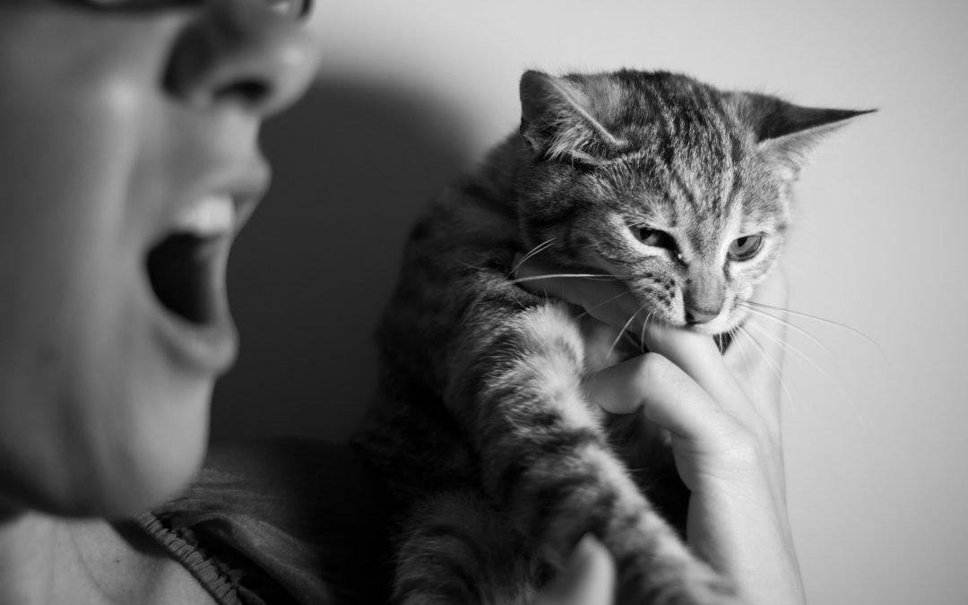 Cat bite human