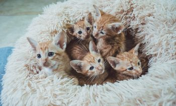 Thinking of Getting a Kitten?