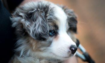 How Do I Take Care of My Pet Dog