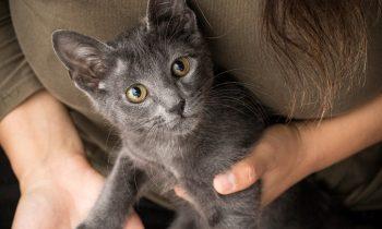 Kitten Socialisation and Exposure Checklist